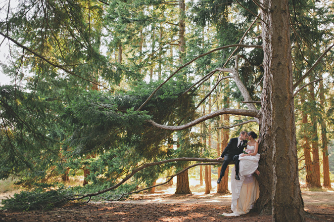 bride & groom in an old growth tree at rathtrevor park, parksville, bc